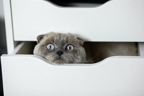 引き出しの中に入って顔を出す猫