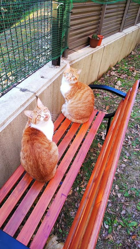 ベンチの二人