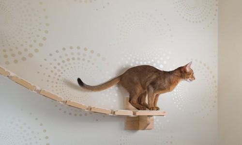 キャットウォークから飛び移ろうとする猫