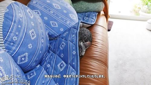 マットの下に入って体が半分出ている子猫