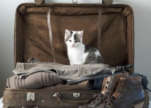 キャリーバッグと猫の写真