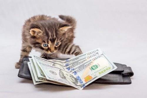 子猫と紙幣と財布