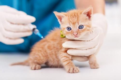 子猫のワクチン接種
