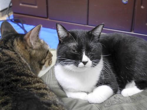 不機嫌な目つきで見る猫