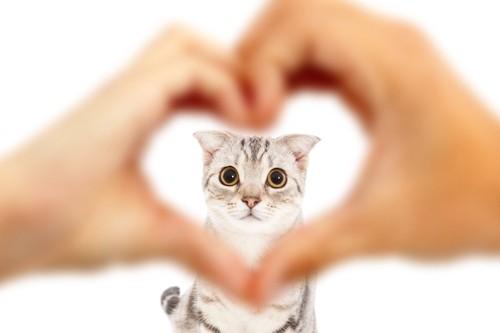 人の手で作られたハート越しの猫