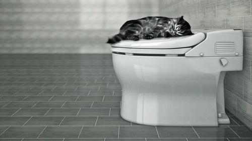 トイレで寝る猫