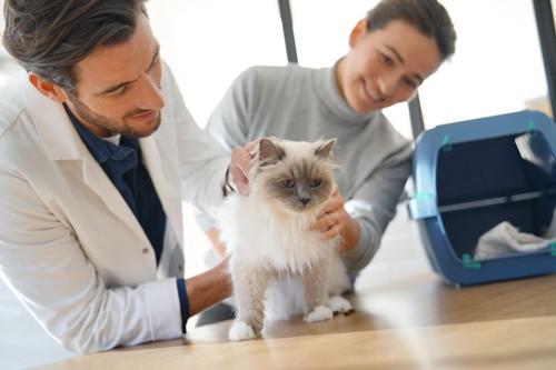 獣医師の診察を受けている猫