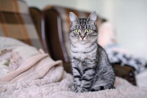 お座りしてこちらを見る猫