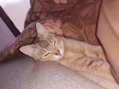 こたつから頭を出して眠る猫