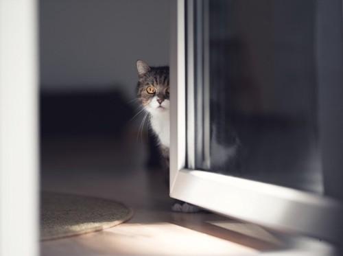 ドアからのぞく猫