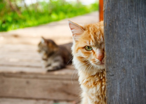物陰からのぞく猫