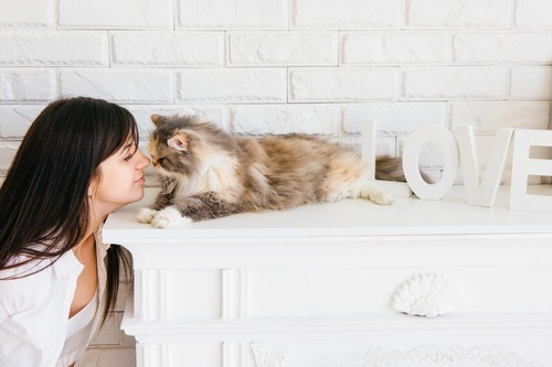女性と向かい合う猫