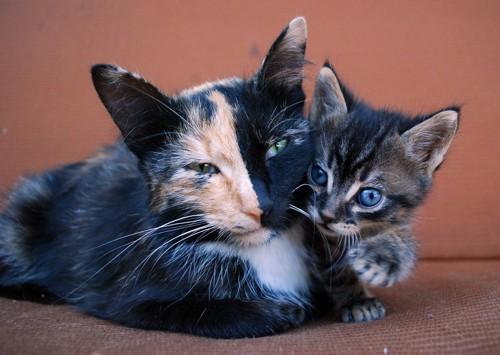 顔の中央で模様がきれいに分かれている母猫と子猫