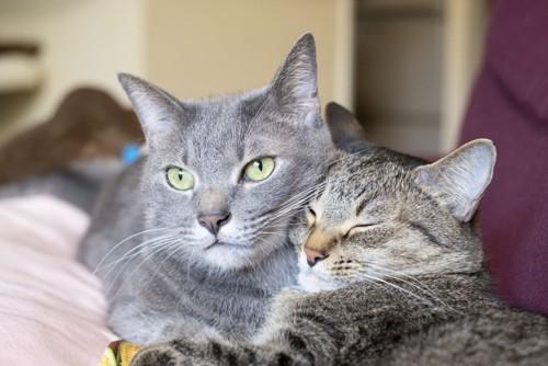 抱き着く猫