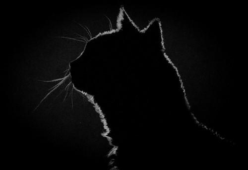 暗闇と猫の横顔のシルエット