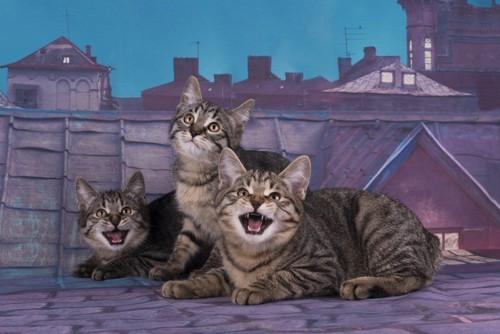 夜の街と猫