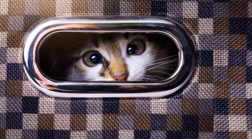 ケースの持ち手からのぞく猫