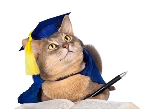 学生の恰好をした猫