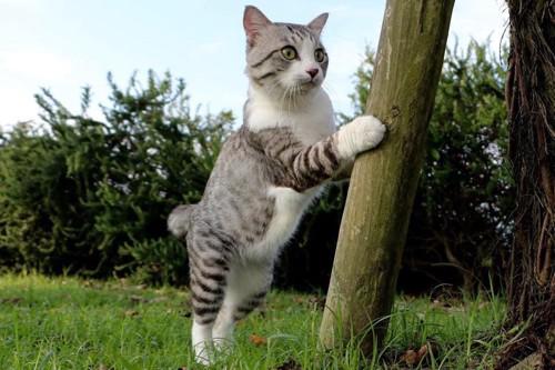 木に寄り添うニャン吉