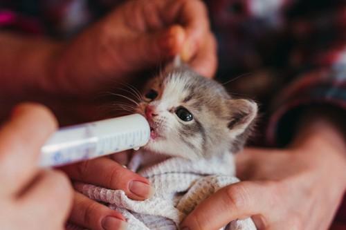 シリンジで飲む子猫