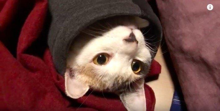 自分が可愛いと思っている猫