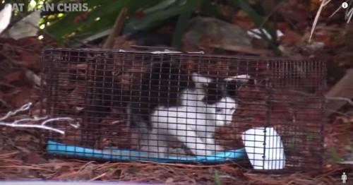 青いマットに足をかける猫とひっくり返ったボウル