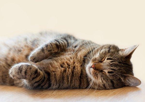 あお向けに寝るキジトラ猫