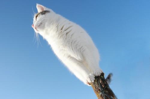 細い棒のてっぺんに乗っている青空に映える猫