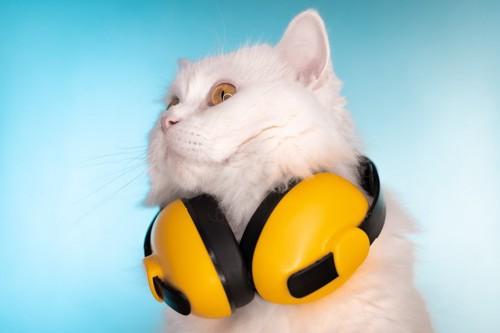 ヘッドホンと猫