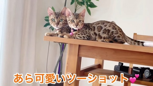 並んで座る猫の親子