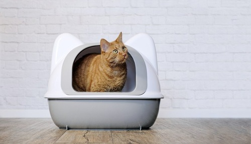 カバー付きのトイレから顔を覗かせる猫