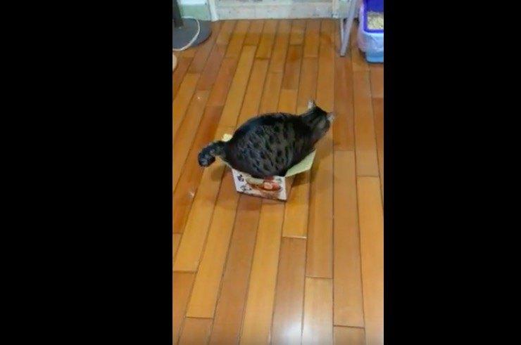 箱に入ろうとしている猫