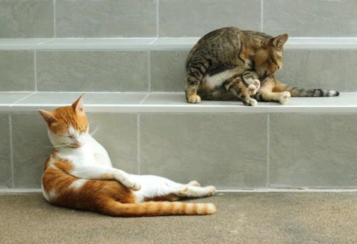 グルーミングする二匹の猫