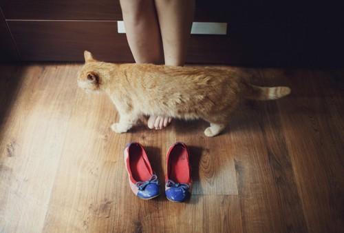 足元に居る猫
