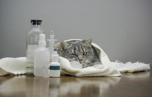 治療器具とタオルに包まった猫