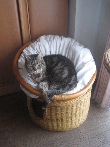 ソファに横たわる猫の写真