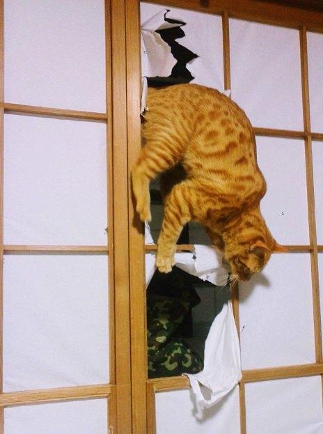 障子の穴からネコが飛び出している画像