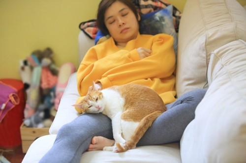 男性の上で眠る猫
