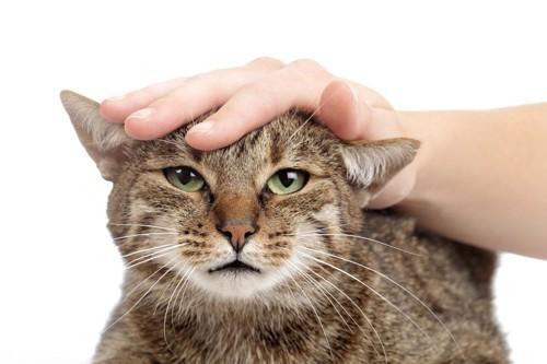 頭をなでられている猫