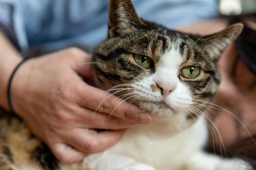 人に撫でさせている猫