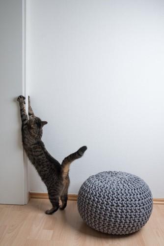 壁に前足を当てて伸びてる猫