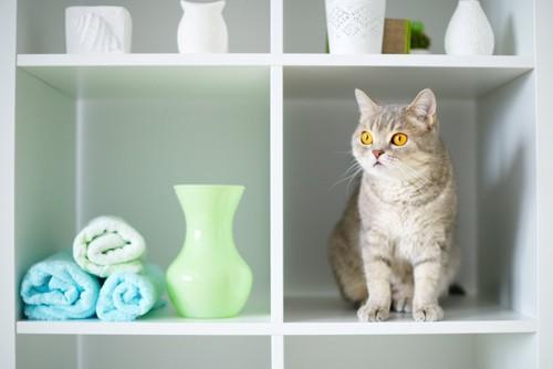 棚の空間にいる猫