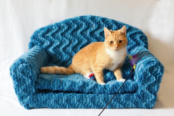 カウチに座っている猫
