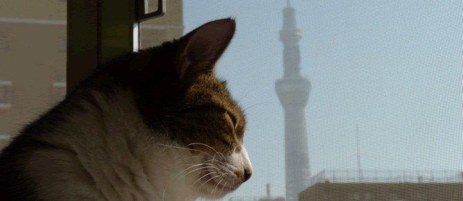 猫園の窓辺の猫とスカイツリー