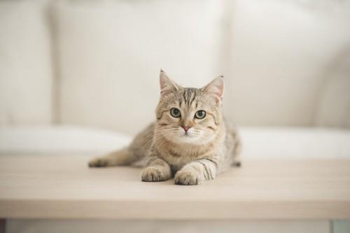 遠巻きに眺める猫