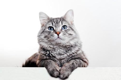 何かを考えていそうな猫