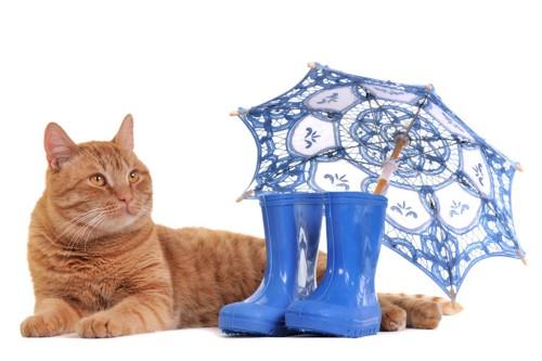 猫と傘と長靴