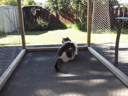 エンクロージャーの中の猫
