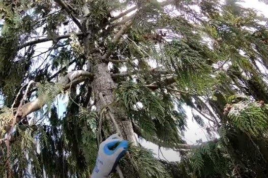 子猫が立ち往生している木