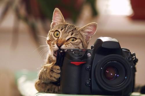 カメラを掴んで齧る猫
